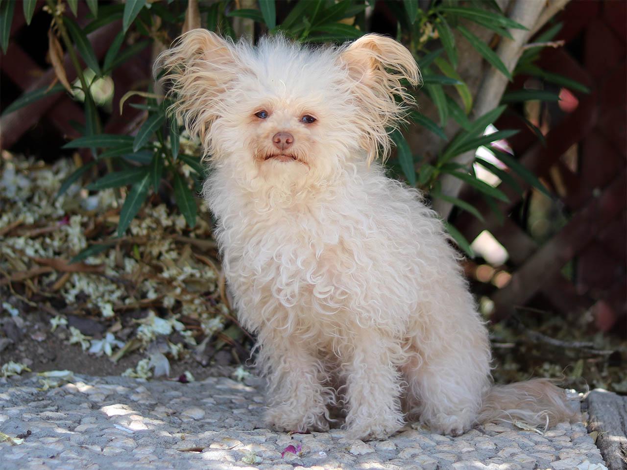 lambchop good dog animals