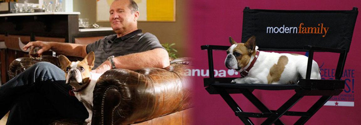 Slider-Modern-Family-2-Ed-chair-1152x400px