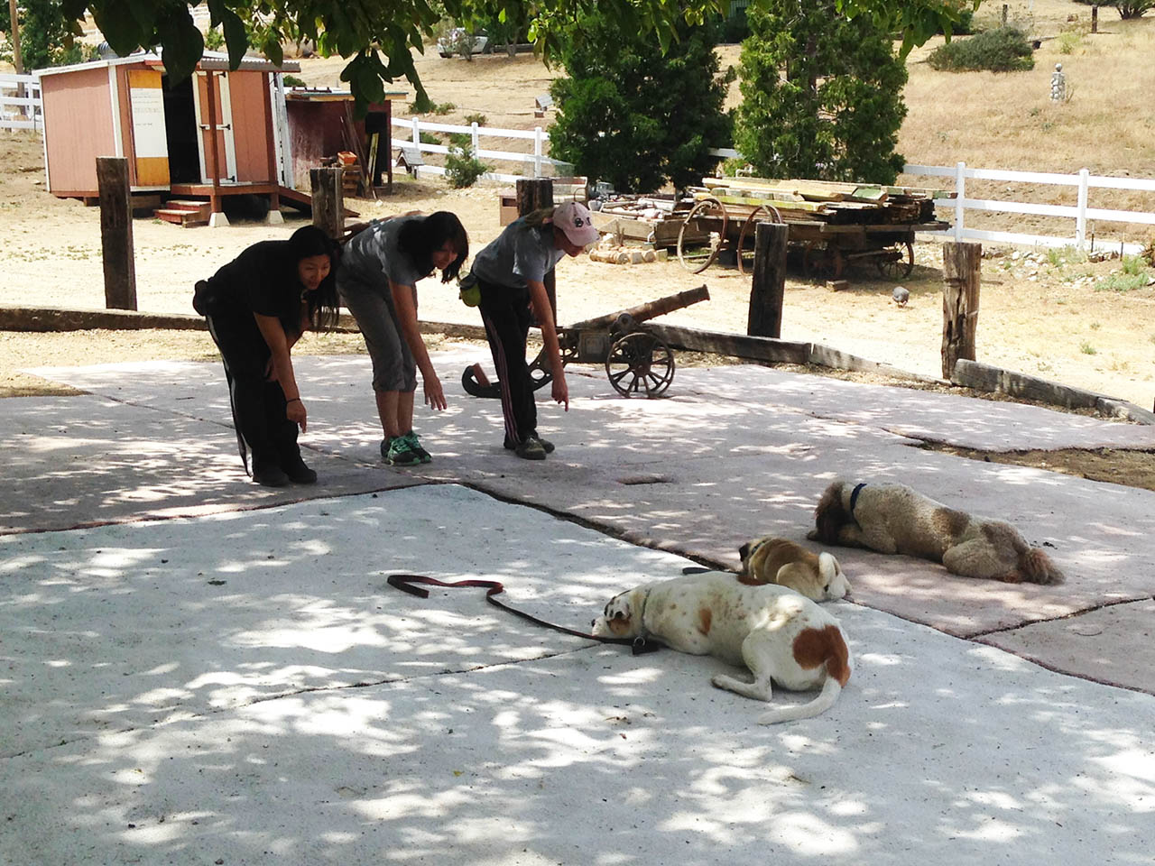a day at the ranch good dog animals