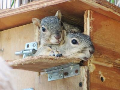 SquirrelsinBox